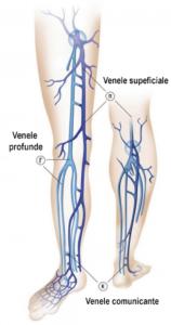 venele din picior
